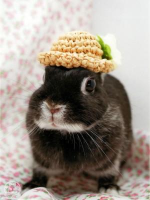 帽子を被ったくう~